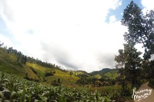 Hills and garden of Pai